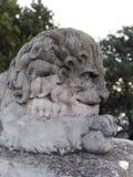 León melancólico foto de archivo libre de regalías