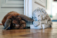 León y conejo Imágenes de archivo libres de regalías