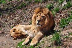 León y leona Fotos de archivo libres de regalías