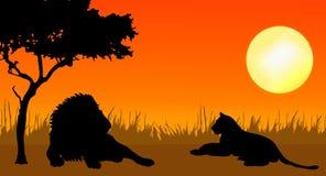 León y leona en puesta del sol ilustración del vector