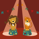 León y tigre en zócalos en circo Foto de archivo