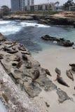 Leões da angra e de mar de La Jolla Imagens de Stock Royalty Free