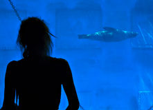 Leões de mar de G no jardim zoológico de Barcelona Fotografia de Stock Royalty Free