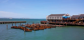 Leões de mar do cais 39 de San Francisco Imagem de Stock