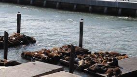 Leões de mar do cais 39 de San Francisco filme