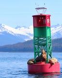 Leões de mar estelares na boia com as montanhas em Juneau, Alaska foto de stock