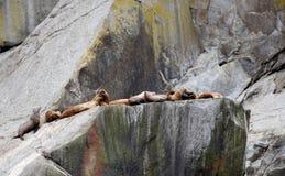 Leões de mar nos fiordes parque nacional de Kenai, Alaska fotografia de stock