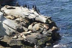 Leões e selos de mar em Rocky Coast Fotografia de Stock