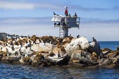 Leões e selos de mar no cais em Monterey, Califórnia Imagem de Stock Royalty Free