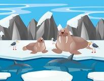 Leões e tubarão de mar no Polo Norte Imagem de Stock Royalty Free