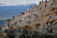 Leões-marinhos e pássaros de mar de relaxamento. Fotos de Stock Royalty Free