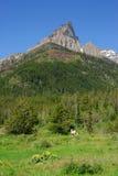 leśna mount łąkowa Obraz Stock