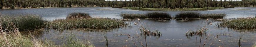 leśna panorama lake Fotografia Royalty Free