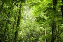 leśna zieleń obraz stock