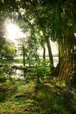 leśna zieleń Fotografia Royalty Free