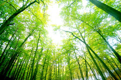 leśna zieleń