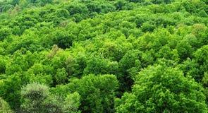 leśna zieleń Obrazy Royalty Free