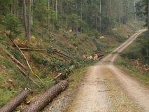 Leśnictwo Zdjęcie Royalty Free