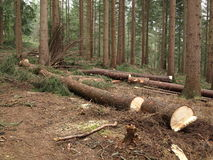 Leśnictwo Fotografia Stock