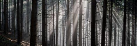 leśny światła słońca Zdjęcie Royalty Free