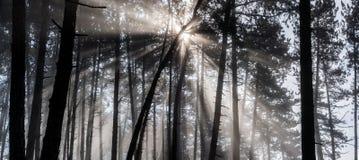 leśny światła słońca Zdjęcie Stock