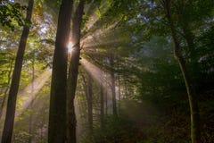 leśny światła słońca Obrazy Royalty Free