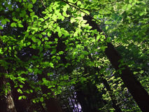 leśny 3 walk zdjęcie stock