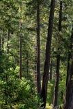leśny bujny Zdjęcia Royalty Free