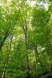 leśny bujny zdjęcie royalty free