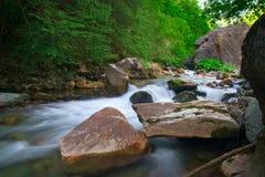 leśny jak strumień Fotografia Stock