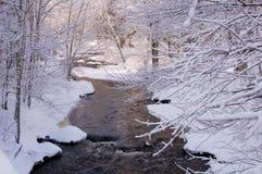 leśny pine cove w śniegu Zdjęcia Royalty Free