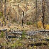 leśny pożarowe nowego wzrostu Fotografia Royalty Free