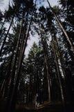 leśny sama chodzić Obraz Stock