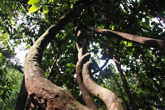 leśny skarbikowany naturalne deszcz fotografia royalty free