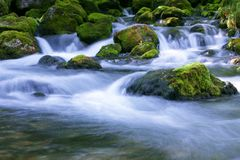 leśny strumienia Fotografia Stock