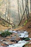 leśny strumienia jesieni obrazy royalty free