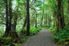 leśny wędrownej ślad deszcz Zdjęcie Royalty Free