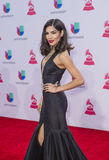 Le 16ème Grammy Awards latin annuel Image stock