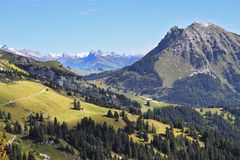 Le abetaie sui pendii di montagna Fotografia Stock