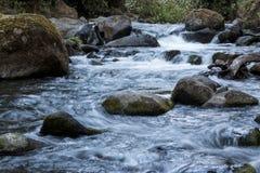 Le acque incontaminate del fiume di Savegre Costa Rica Fotografia Stock Libera da Diritti