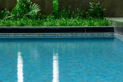Le acque orlano la mostra dell'equilibrio della natura nel envir domestico di rilassamento Fotografie Stock Libere da Diritti
