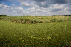 Le alghe hanno coperto il fiume Fotografie Stock