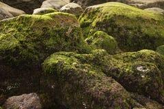 le alghe hanno coperto la roccia verde Fotografie Stock Libere da Diritti