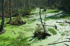 Le alghe hanno riguardato l'alta prospettiva dello stagno di marea Fotografie Stock Libere da Diritti