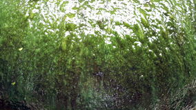 Le alghe verdi dell'acqua della fontana gigante del barattolo sorgono il primo piano stock footage