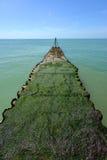 Le alghe verdi hanno coperto il molo Immagini Stock