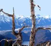 Le alpi nell'inverno (vista dalla Tegelberg-montagna). Fotografie Stock