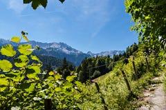 Le alpi tedesche Immagini Stock