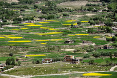 Le alte montagne sono un villaggio tibetano: i campi d'agricoltura, verdi e gialli a terrazze di riso e di orzo, piccolo povero a Fotografia Stock