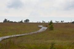 Le alte paludi d'escursione di legno del percorso abbelliscono Botrange Belgio Fotografie Stock Libere da Diritti